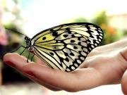 PBYR butterfly-in-hand1
