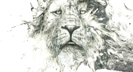 lion-260x142